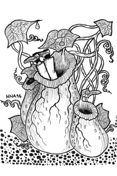 lihansyöjäkasvi juliste mustavalko